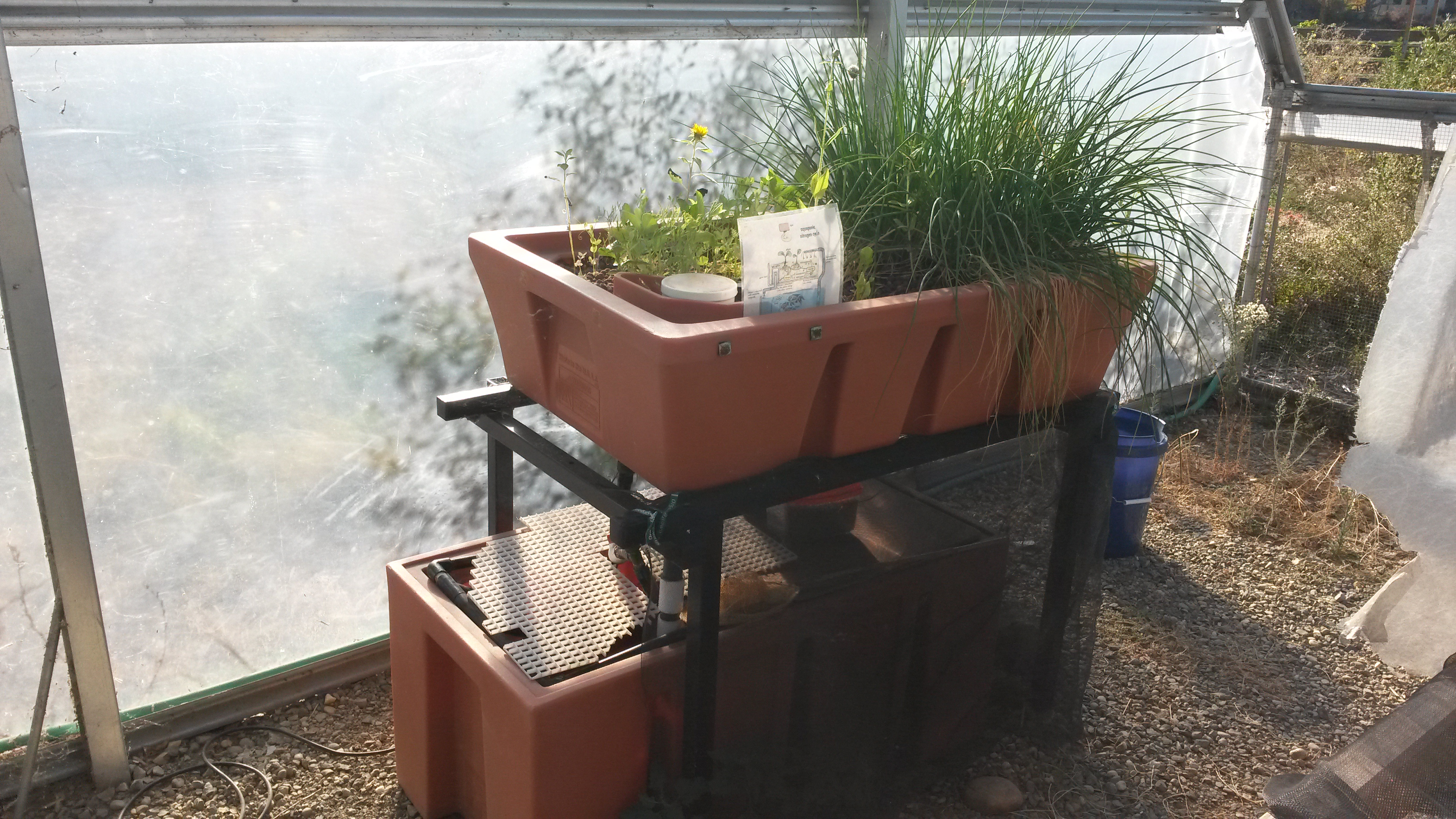 Aquaponics review aquaponics source grow bed this happy for Aquaponic source